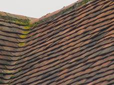 Roof Structures Problems With Wet Rot And Woodworm